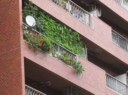 Озеленение балкона и лоджии, террасы или веранды – как сотворить уголок живой природы дома?