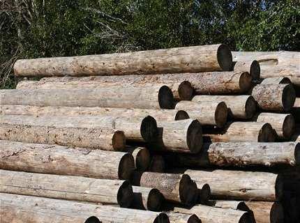 Оцилиндрованное бревно лиственница – запах леса в вашем доме