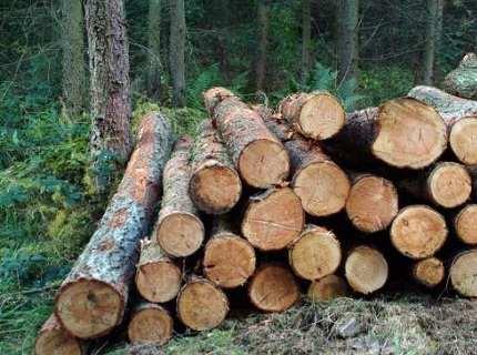 Лесоматериалы, пиломатериалы и проверка их качества