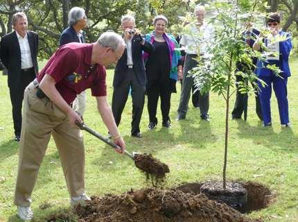 Нормы посадки деревьев и кустарников – как получить хороший урожай